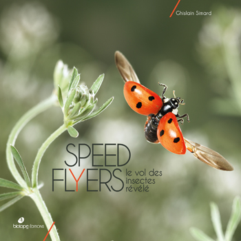 Speed Flyers - Le vol des insectes révélé